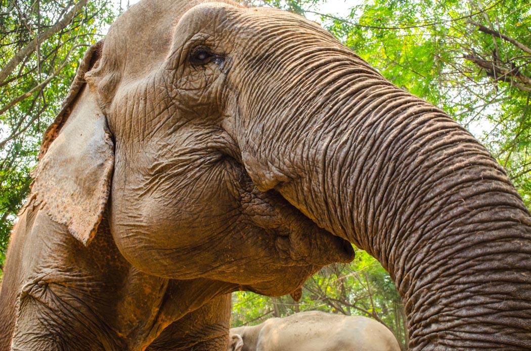 prečo nejazdiť na slonoch v Thajsku